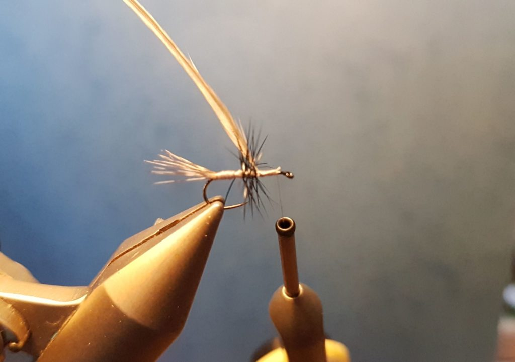 Liscorno hackle mouche fly tying eclosion
