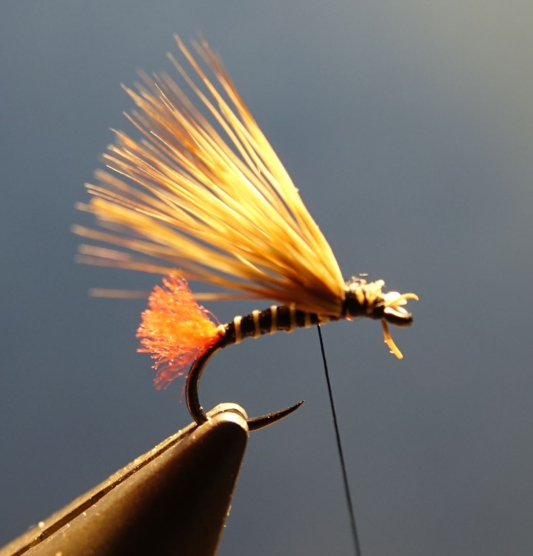 Sedge tag rouge chevreuil roe deer mouche fly tying eclosion 1