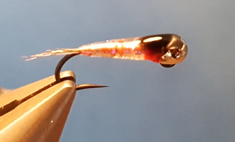 perdigon UV nymphe mouche fly tying eclosion