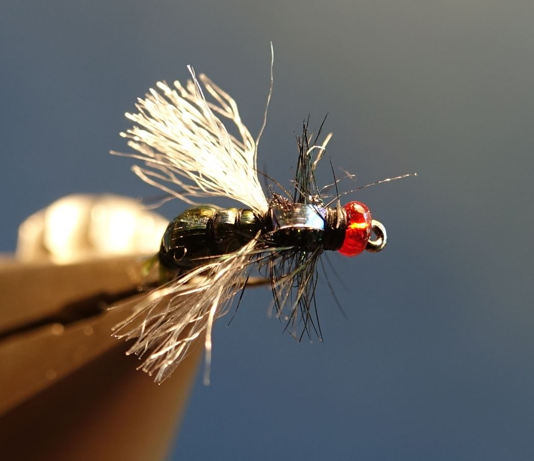mouche bleue shit fly tying montage eclosion