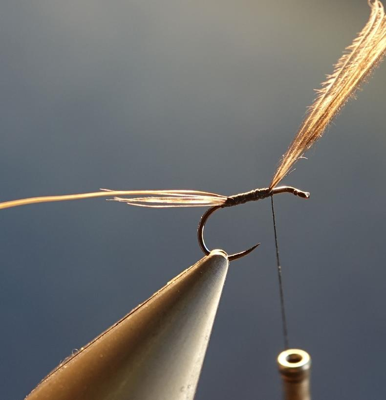 ephemere sombre CDC moose mane poil elan fly tying mouche eclosion