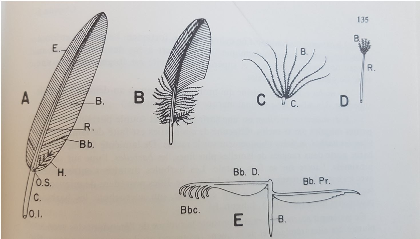 differentes plumes beaumont cassier fly tying mouche eclosion