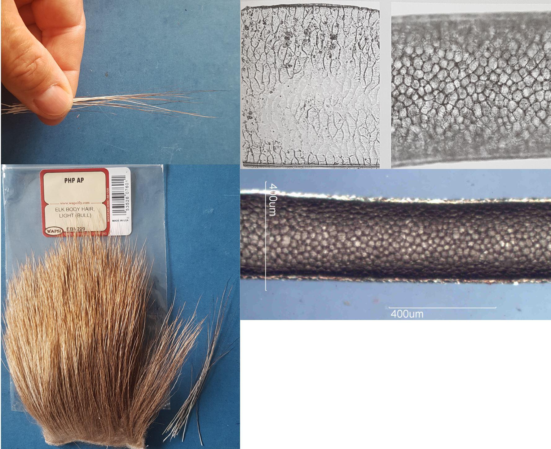 moose elan mane crinière poil hair fur elk body hair mouche fly tying éclosion