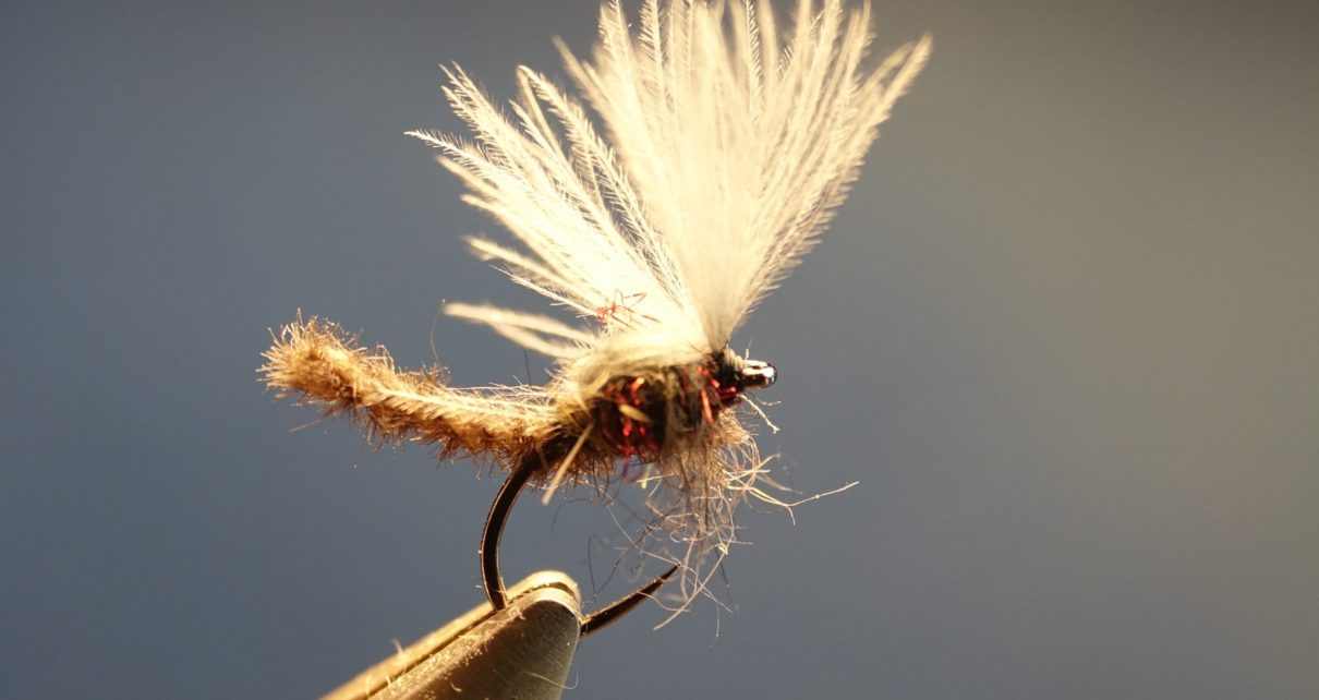 Chironome microchenille CDC dubbing mouche fly tying eclosion Mise en avant