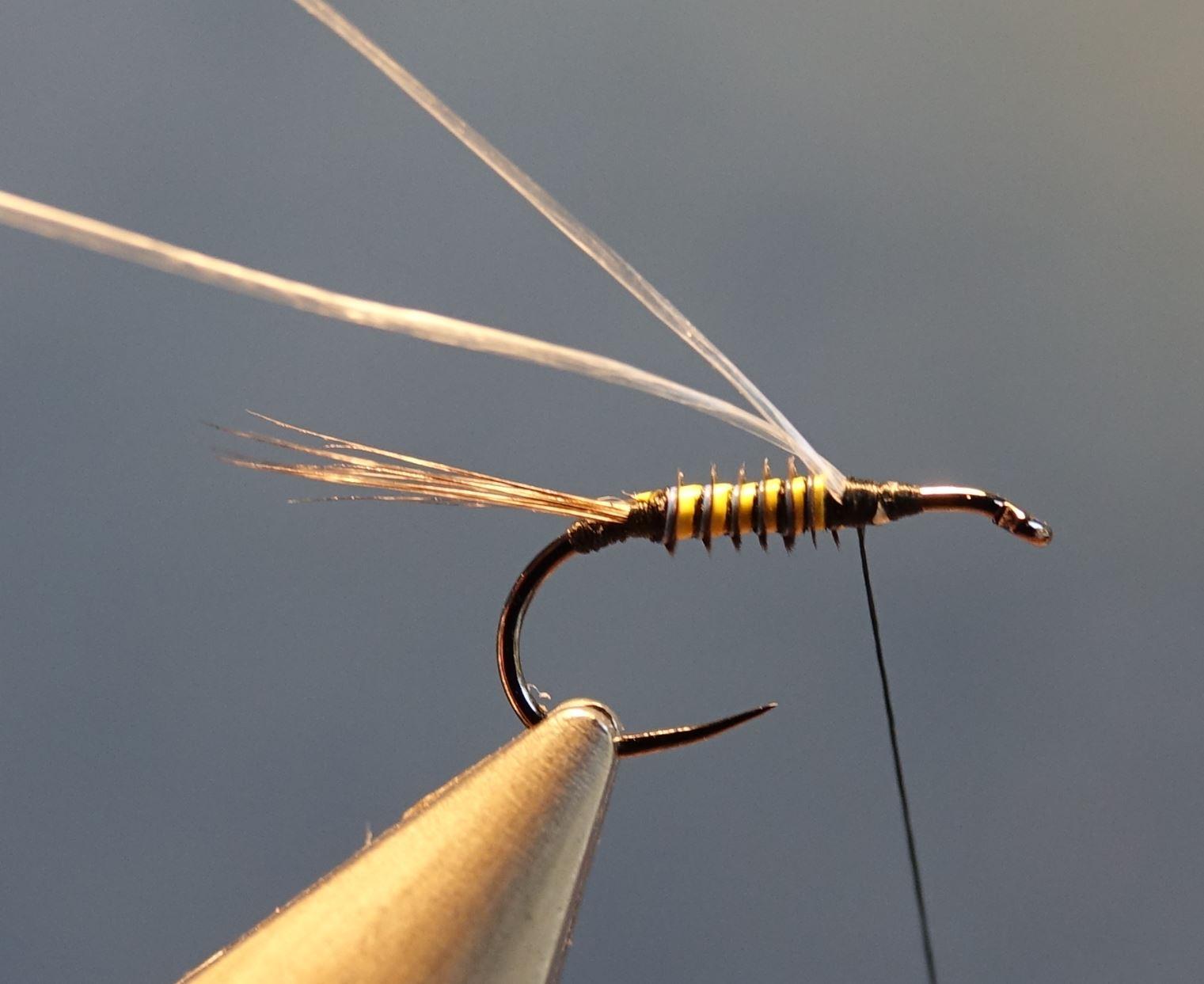 Ephemere ara mouche fly tying eclosion
