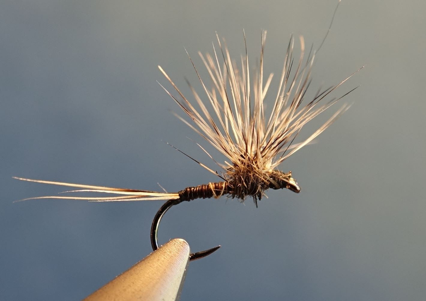Ephemere parachutte blaireauu fly tying badger eclosion mouche