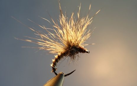 emergente ecureuil paraloop mouche fly tying eclosion