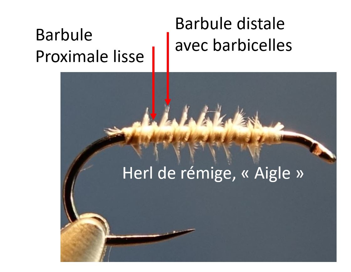 aigle herl mouche eclosion fly tying corps body