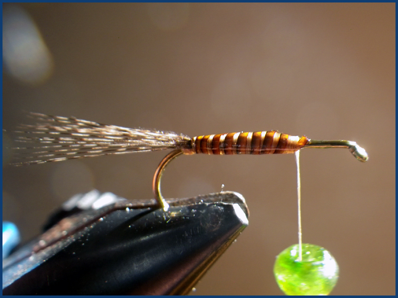 March brown MB pardo paraloop mouche fly tying eclosion 4