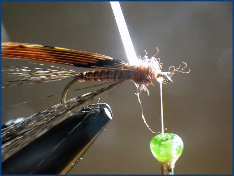 March brown MB pardo paraloop mouche fly tying eclosion