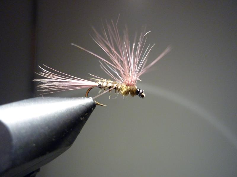 paraloop eclosion fly tying mouche