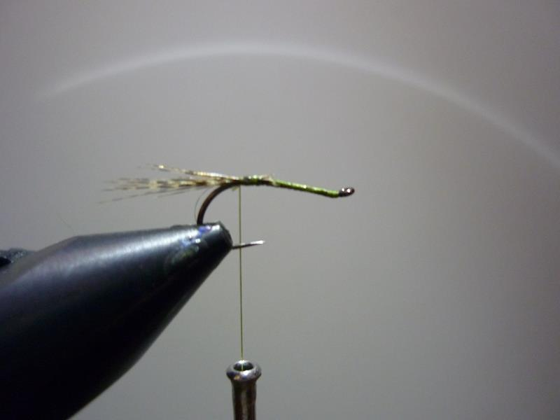 paraloop mouche fly tying eclosion
