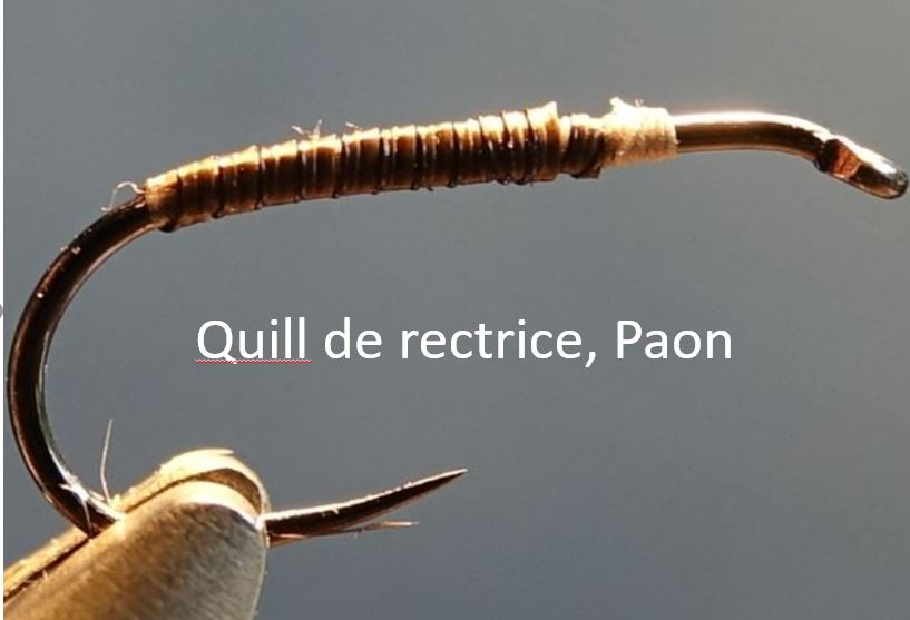 Quill herl rectrice paon mouche fly tying eclosion