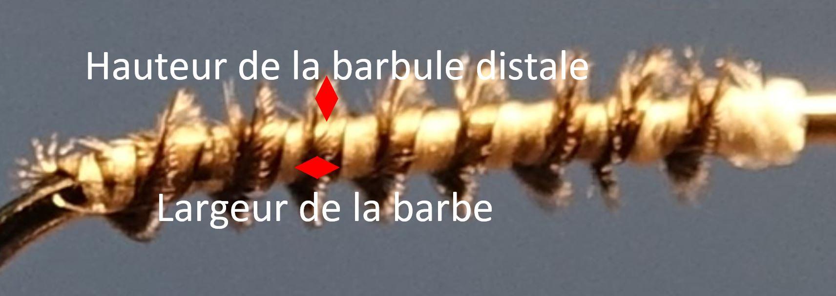 herl corneille detail