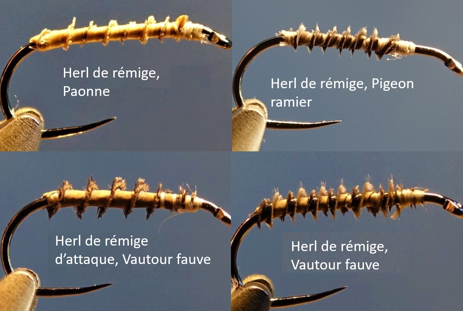 herl rémige pigeon paonne vautour mouche fly tying eclosion