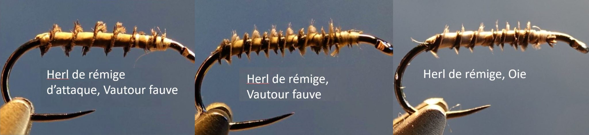 herl remige plume vautour oie mouche fly tying eclosion