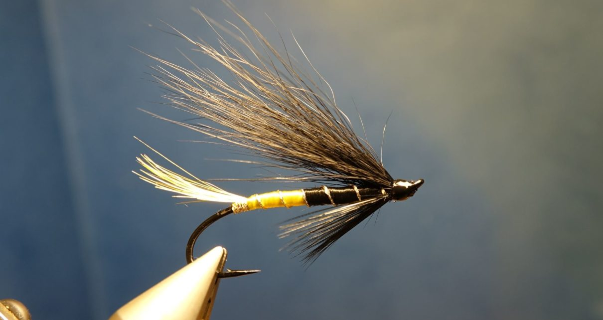 Black maria mouche fly salmon saumon fly-tying eclosion