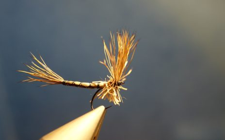 Marche brown chevreuil corps détaché comparadum mouche fly tying eclosion