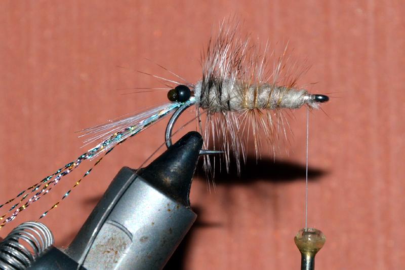 Crevette schrimp mouche fly tying eclosion