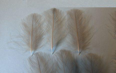 CDC puff select XL echantillon fly flytying tying mouche eclosion