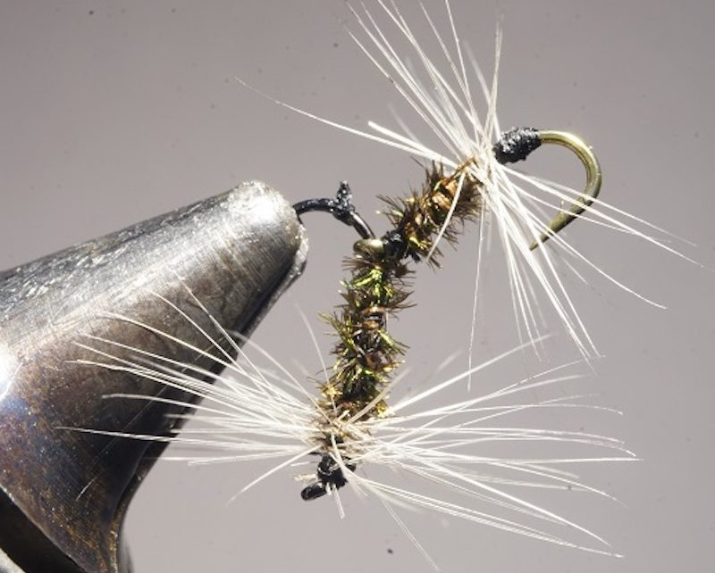 mouche tandem corps paon fly flytying tying mouche eclosion mis en avant