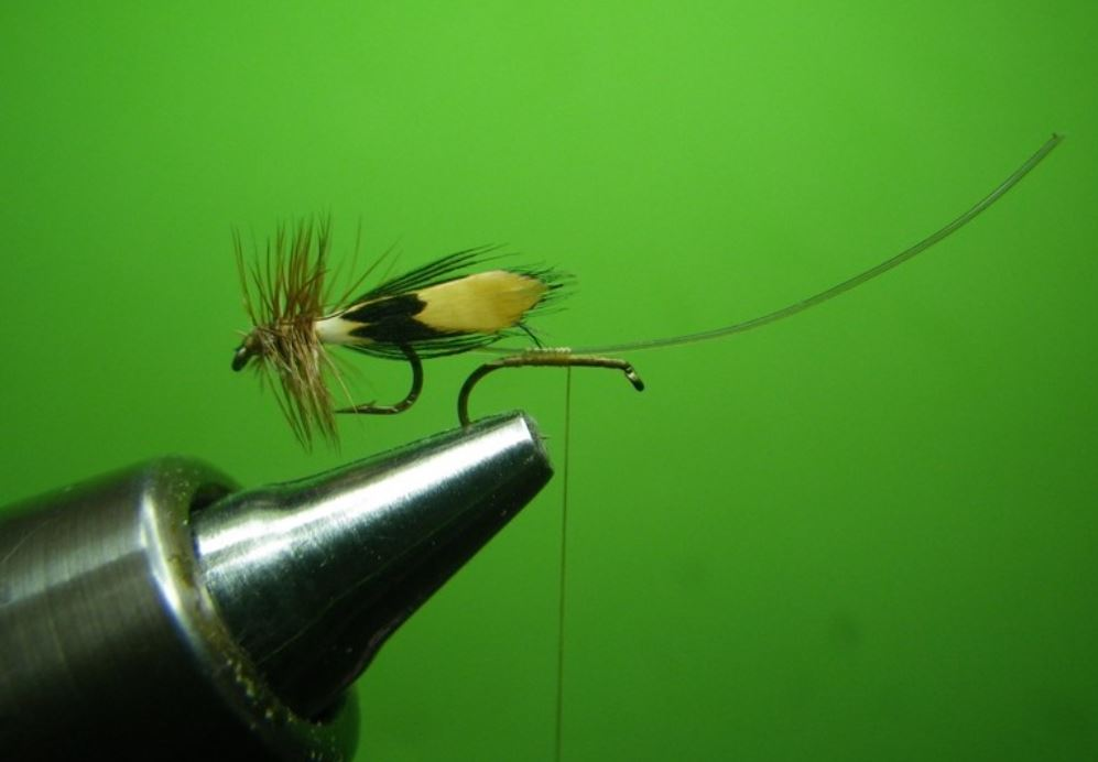 Sedge accouplement mating caddis tandem twin flytying fly mouche tying eclosion