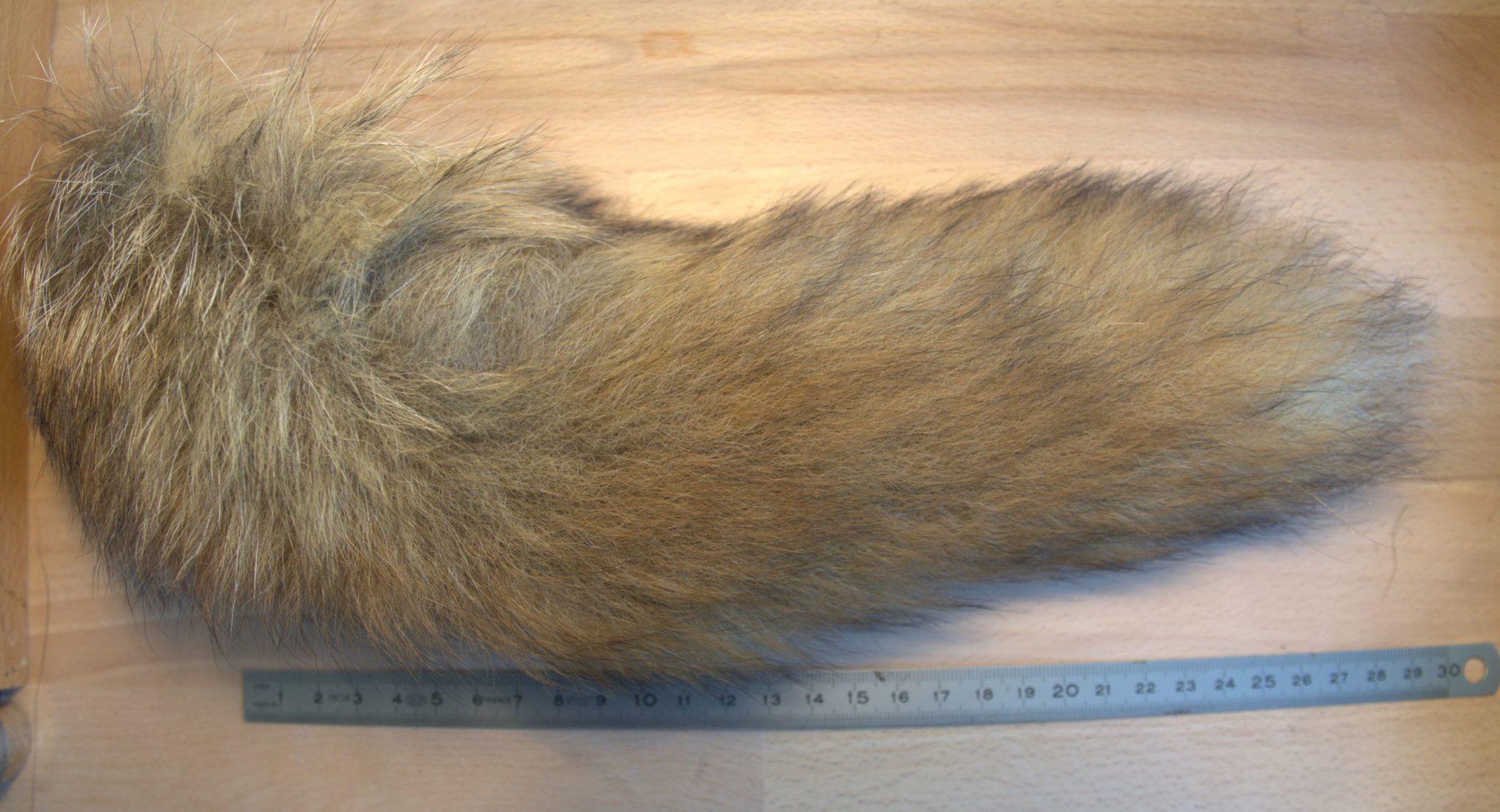 renard roux fox queue tail 2 fly tying flytying mouche eclosion fur poil saumon salmon seatrout truite de mer
