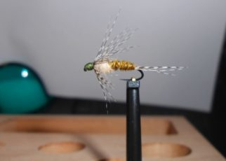 ANR sarcelle teal absolute no refuse nymphe nymph mouche flytying fly tying eclosion